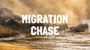 great migration safari