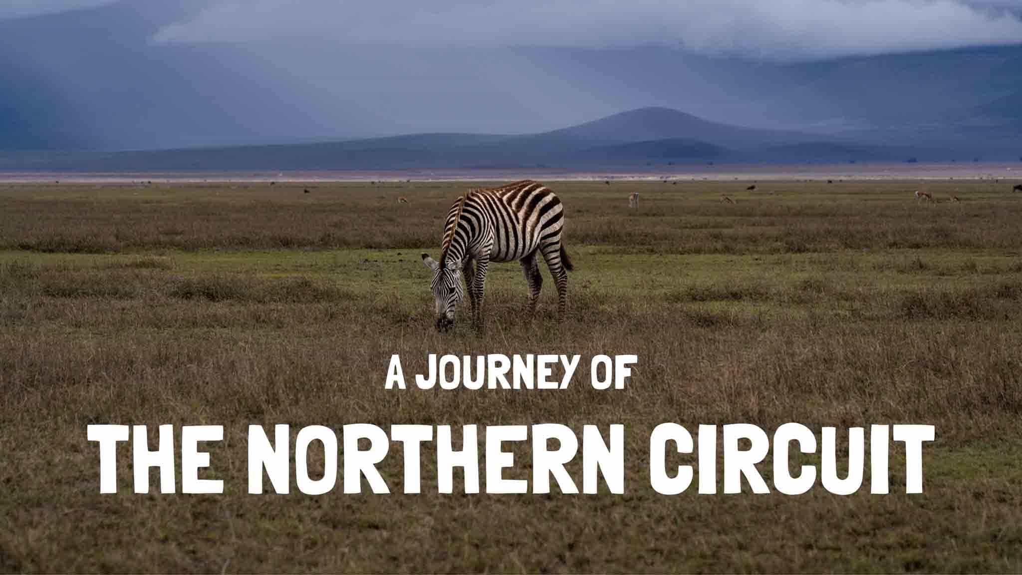 northern circuit safari tanzania