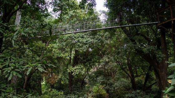 Lake Manyara canopy Treetop walkway