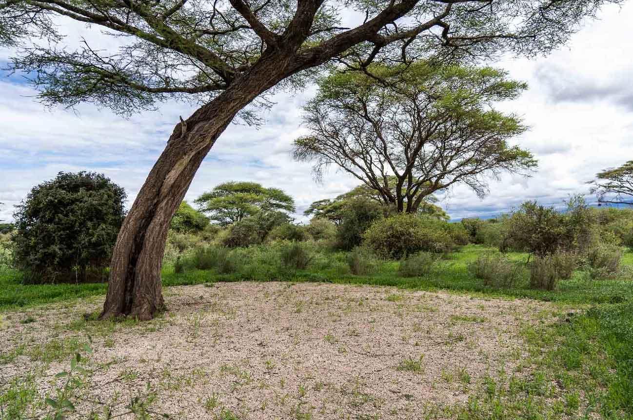 Chui public campsite enduimet wildlife management area