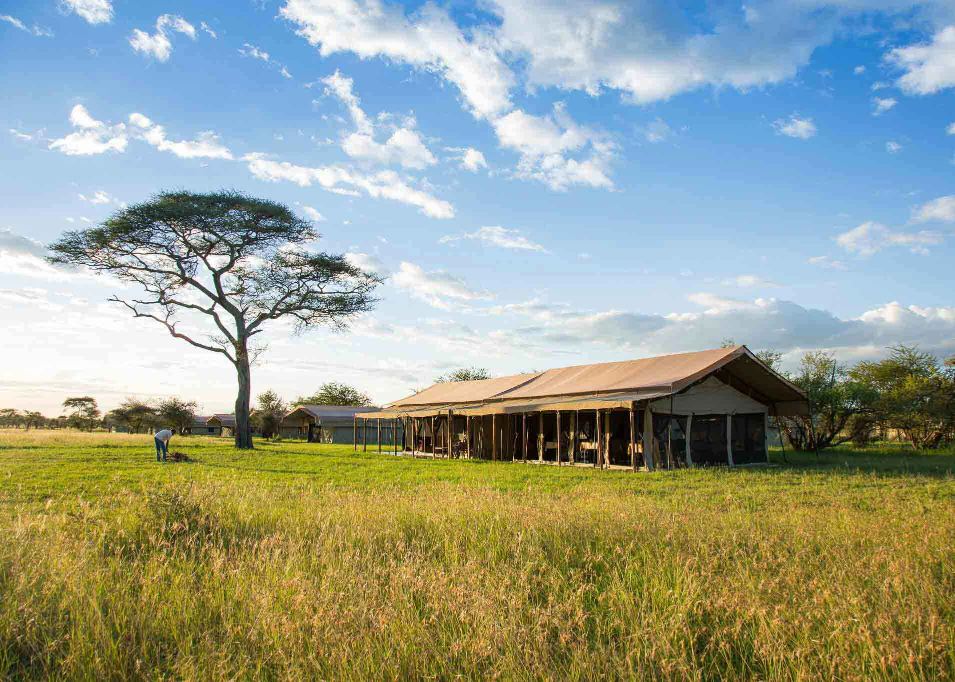 thorn tree camp, serengeti, tanzania