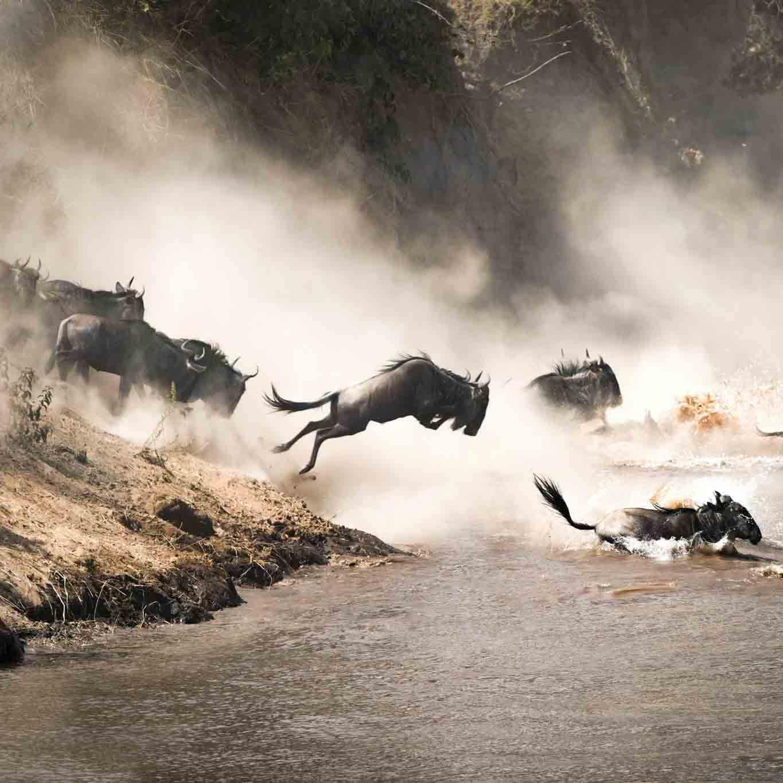 arusha trips highlights tanzania